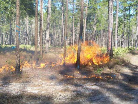 wire grass on fire