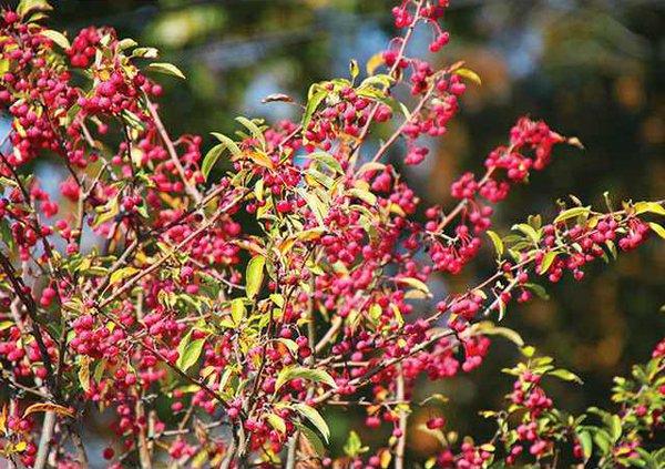 nativeplant