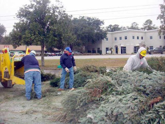 Larry Frank and dave chip up trees swida photo