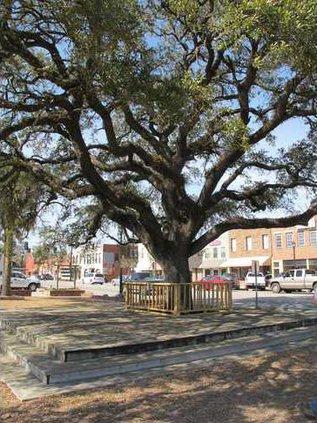 Pembroke tree 2