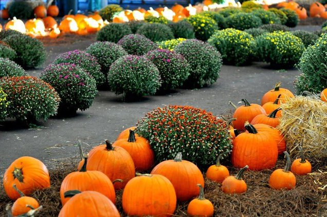 pumpkin patch promo 2.jpg
