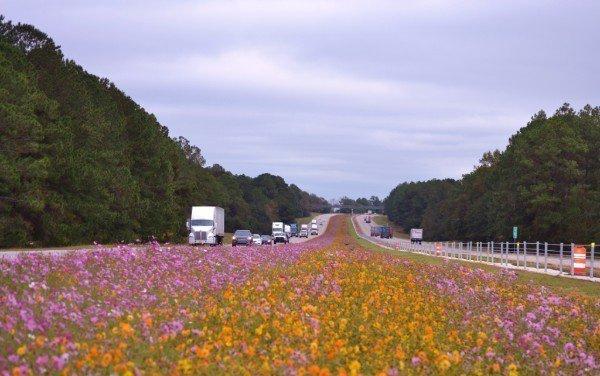 I16 wildflowers.jpg