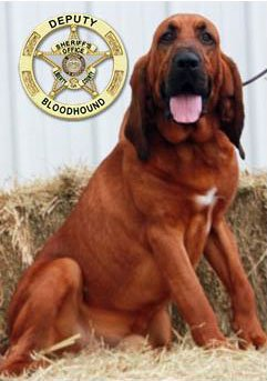 Sheriff's Office Bloodhound